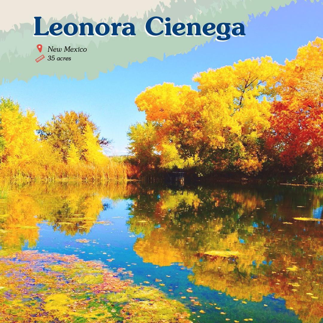 Leonora Cienega Card front